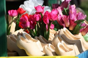 Wooden Shoes and Tulips by Sarah Franzen